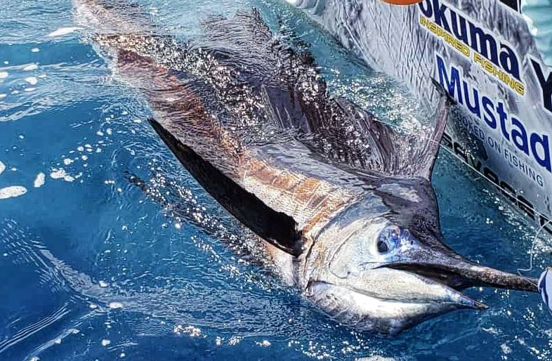 marlin-fishing-offshore-003