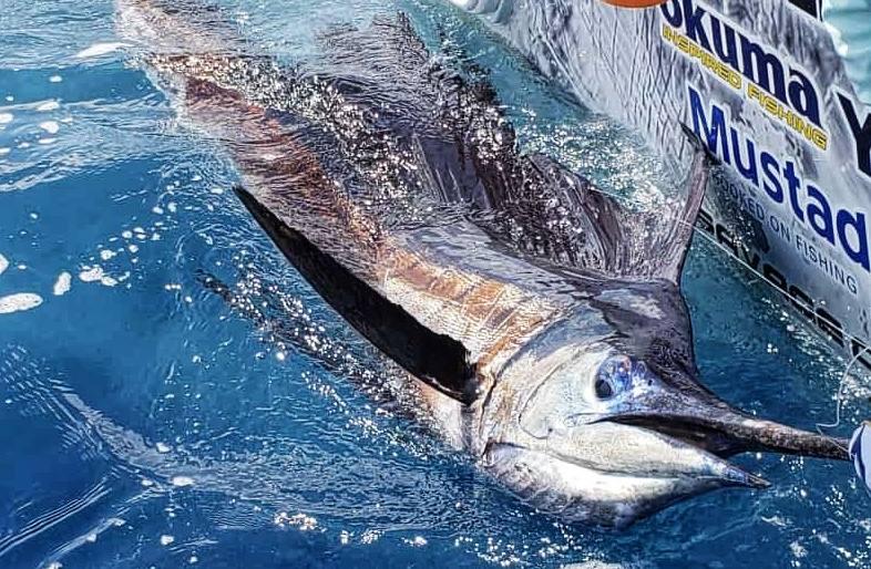 marlin-fishing-offshore-003
